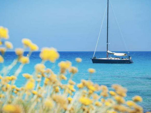 Les points clés de l'immobilier en Corse du Sud